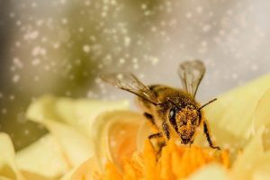 Read more about the article For the love of bees