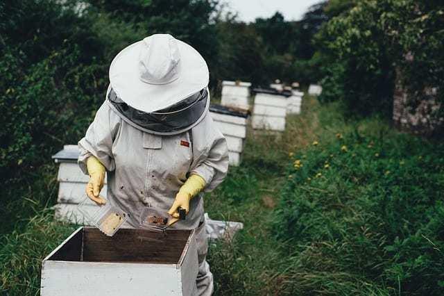 Beekeeper