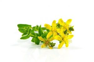 Read more about the article How St John's Wort can help more than your mental well being