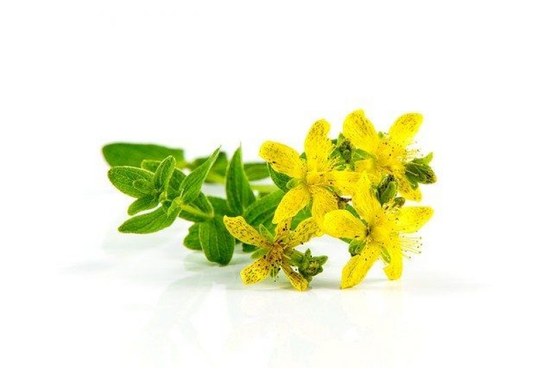 How St John's Wort can help more than your mental well being