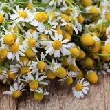 Active-Ingredients_0002_medical-chamomile-PZ5AXH6-160x160 About Us