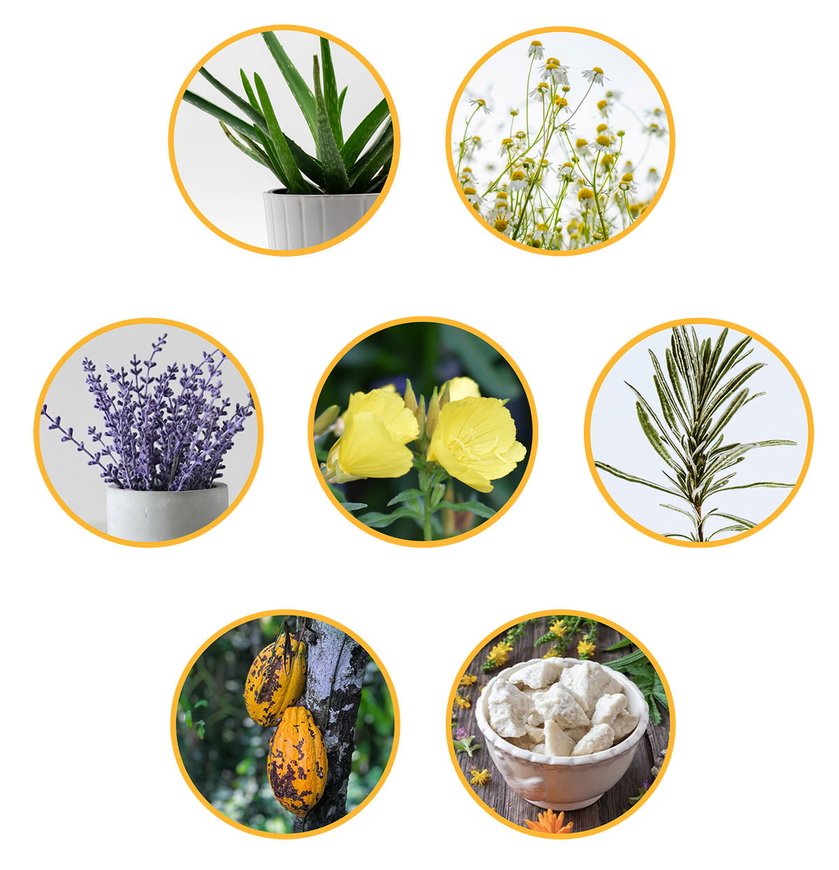 Active Ingredients - Aloe, Chamomile, Lavendar, Evening Promrose, Rosemary, Cocoa Seed Butter, Shea Butter